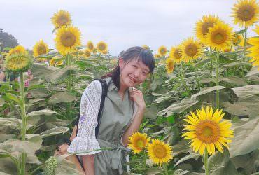 清瀨 東京近郊景點 池袋出發30分 金黃向日葵花海半日遊