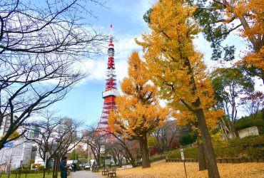 東京銀杏推薦景點6選 & 6個口袋景點!內含2019日本黃葉預測資訊