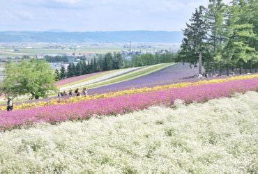 七月北海道自駕自由行 三天兩夜DAY2行程分享|富良野&美瑛的拍照賞花景點