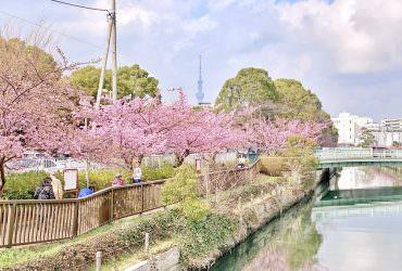 東京河津櫻秘境!賞櫻不用人擠人!還能拍到晴空塔與粉紅櫻花同框的美景|木場公園大橫川