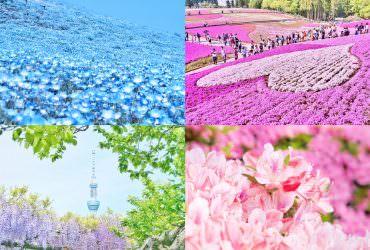 4月5月日本好去處!4種花卉9大景點推薦 關東夢幻花景賞不完|粉蝶花 芝櫻 紫藤 杜鵑花|東京自由行